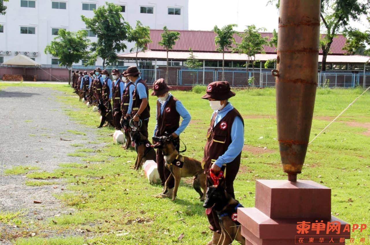 柬埔寨扫雷犬可嗅出新冠病毒
